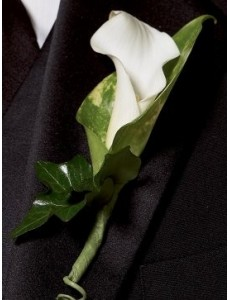 Chic White Calla Lilly Buttonhole
