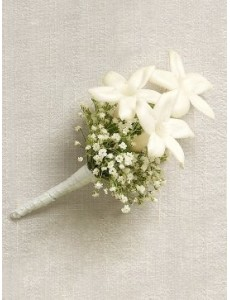 Pure White Staphanotis Buttonhole